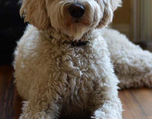 Blogger Dogs Take on ALPO!