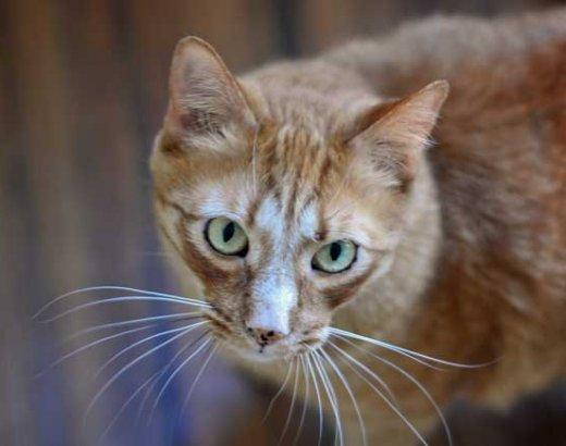 Meet the Gabel Cats!