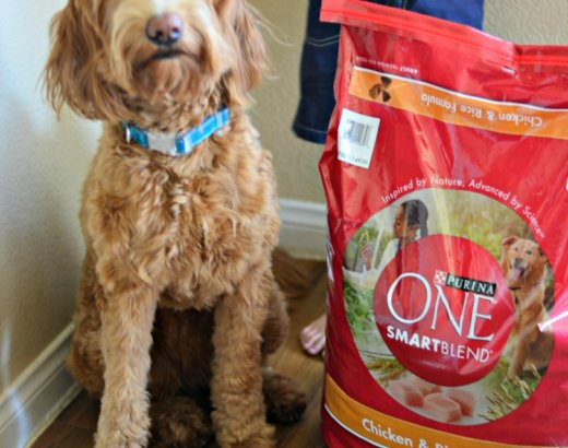We're Taking the Purina One 28 Day Challenge!