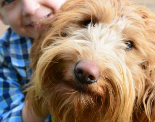 #Ad 4 Dog Safety Tips For New Dog Owners