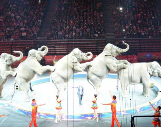 Ringling Bros. and Barnum & Bailey Circus in Vegas