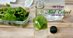 Easy to make mint extract recipe with just 2 ingredients!