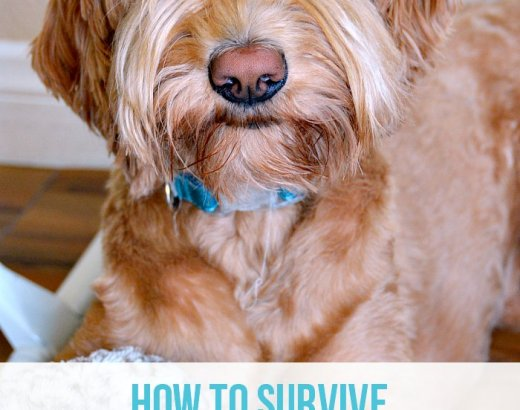 5 Tips for Surviving the 1st Year as a Dog Parent