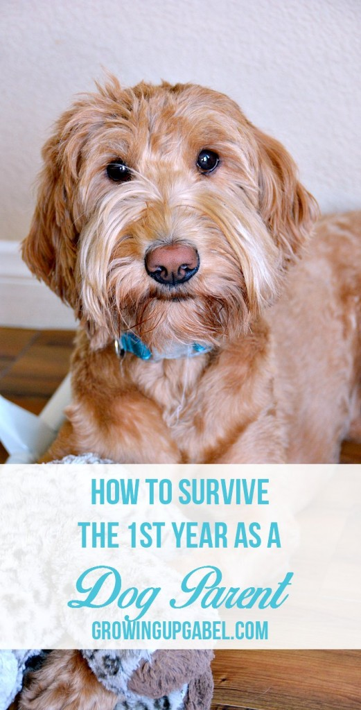 Thinking about getting a dog? Check out these tips on how to survive that first year of being a new dog parent!
