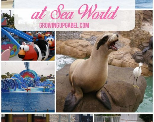 7 Must See Attractions at San Diego SeaWorld