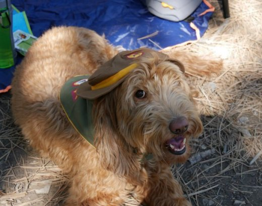 Tips and Products for Camping with Dogs