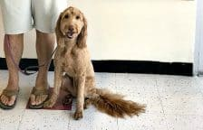 Petco Dog Grooming Services