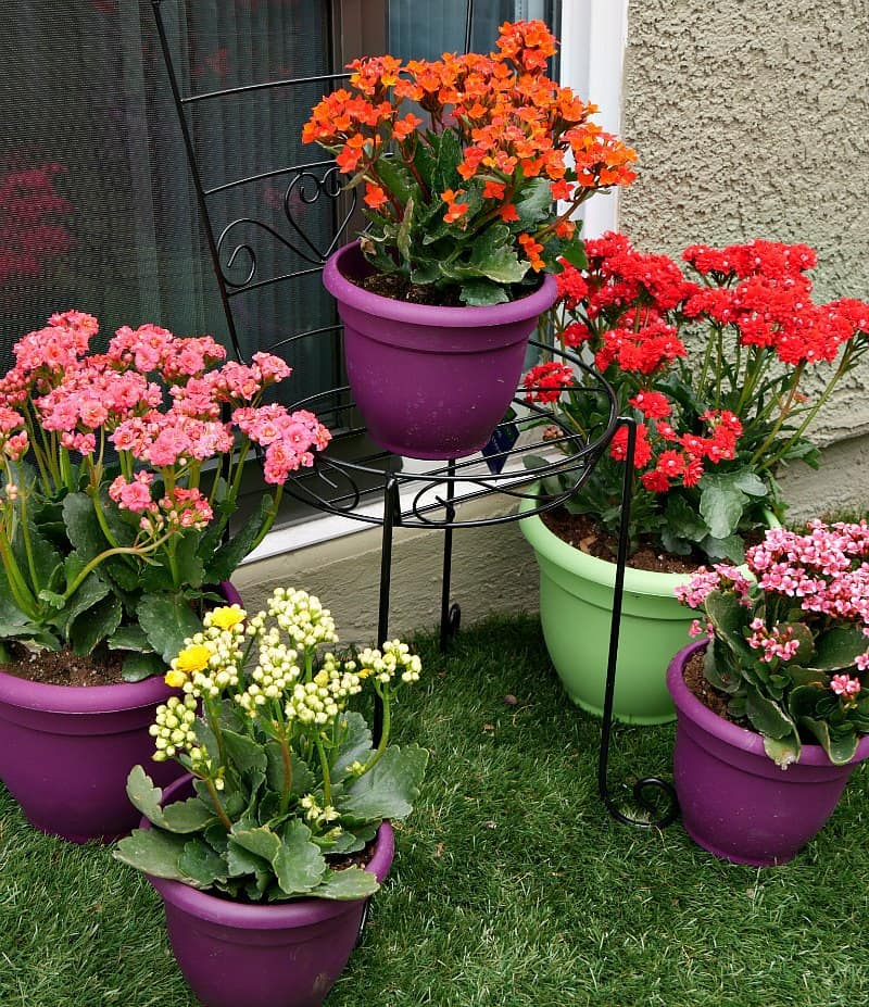 Plants For Tiny Pots: 3 Small Backyard Ideas To Create An Outdoor Oasis