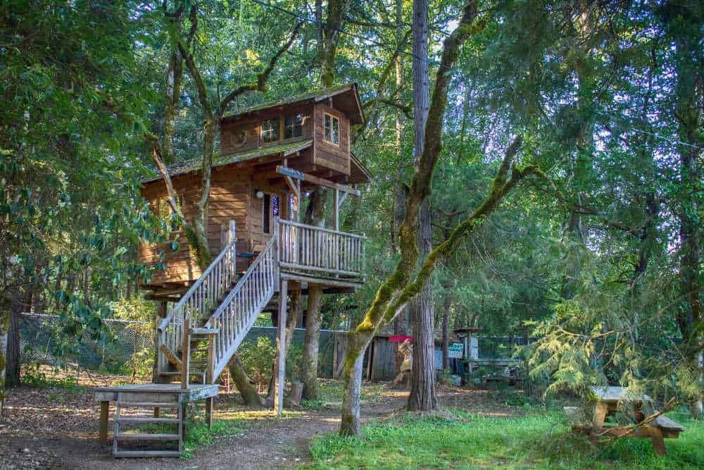 A treehouse hotel